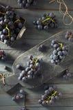 未加工的有机紫色康科德紫葡萄 免版税库存图片