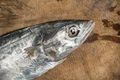 未加工的未煮过的鱼 库存照片
