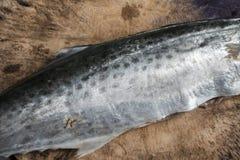 未加工的未煮过的鱼 免版税库存图片