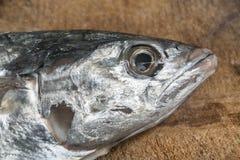 未加工的未煮过的鱼 免版税库存照片