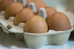 未加工的棕色鸡鸡蛋特写镜头视图在蛋盒的在白色背景 免版税库存图片