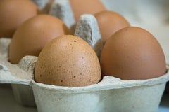 未加工的棕色鸡鸡蛋特写镜头视图在蛋盒的在白色背景 图库摄影