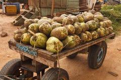 未加工的椰子 库存图片