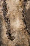 未加工的橄榄色的木头 库存图片