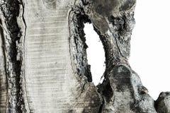 未加工的橄榄色的木头 免版税库存照片
