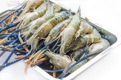 未加工的河虾 免版税库存图片