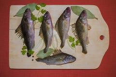 未加工的淡水鱼出王牌 库存图片