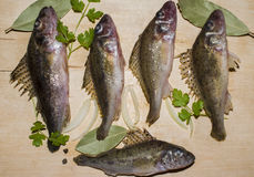未加工的淡水鱼出王牌 图库摄影