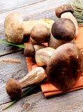 未加工的牛肝菌蕈类蘑菇 库存图片