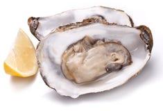 未加工的牡蛎和柠檬在whte背景 免版税库存图片