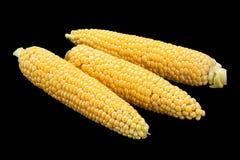 未加工的甜玉米细节 免版税库存图片