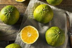未加工的绿色有机牙买加丑橘 图库摄影