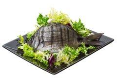 未加工的罗非鱼 免版税图库摄影