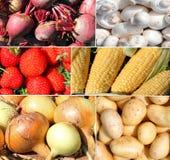 未加工的蔬菜和果子蒙太奇 图库摄影