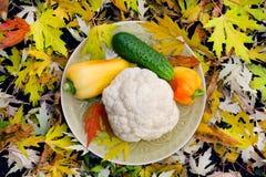 未加工的蔬菜在晚秋天明亮的背景中晒干 库存图片