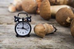未加工的蘑菇和闹钟在一张木桌上 牛肝菌蕈类面包可食森林s灰鼠 免版税库存照片