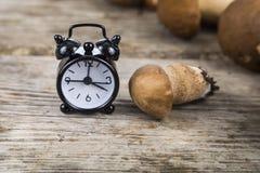 未加工的蘑菇和闹钟在一张木桌上 牛肝菌蕈类面包可食森林s灰鼠 库存图片