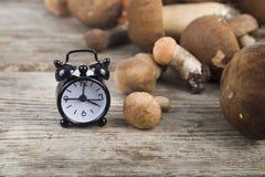 未加工的蘑菇和闹钟在一张木桌上 牛肝菌蕈类面包可食森林s灰鼠 图库摄影