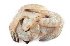 未加工的虾 免版税库存照片