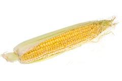 未加工的被剥皮的玉米棒子 免版税库存照片