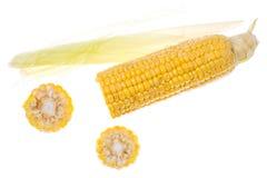 未加工的被剥皮的玉米棒子 库存照片