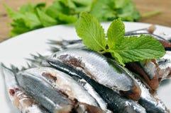 未加工的西班牙boquerones,鲥鱼典型在西班牙 免版税库存照片