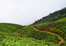 未加工的道路穿过在Munnar,喀拉拉,印度青山的茶园  免版税库存照片