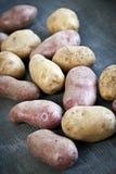 未加工的马铃薯 免版税库存照片