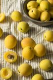 未加工的黄色有机Angelcot杏子 库存图片