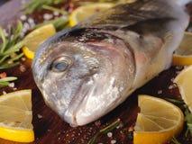 未加工的dorado鱼用迷迭香和海盐 免版税库存图片