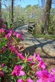 未开发的地区公园桥梁和桃红色杜娟花在春天 免版税库存图片