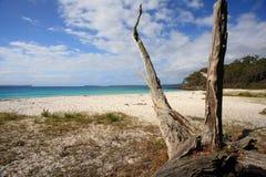未开发的地区海滩Jervis海湾澳大利亚 免版税库存照片