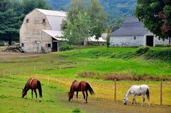 未开发的地区, MA :吃草在农场的马 库存图片