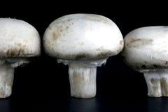 未张开的蘑菇 免版税库存照片