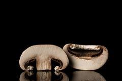 未张开的蘑菇 免版税图库摄影