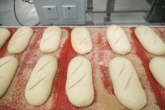 未成熟的酸面团大面包在传动机的 库存图片