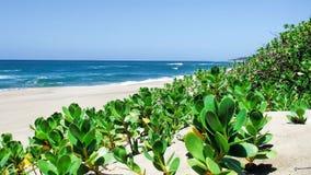 未损坏的海滩 库存图片