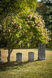 未玷污的墓碑在一座晴朗的公墓 免版税库存照片