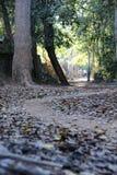 未玷污的路径 图库摄影