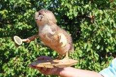 未知的人拿着一只猴子鸭子 免版税库存照片