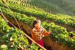 未知的名字女孩在手上的拿着草莓在草莓农场在早晨愉快 图库摄影