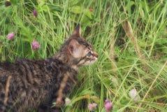 未知的品种一只美丽的镶边露天使用的和寻找的小猫在草的 免版税库存照片