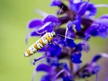 未知的昆虫 库存图片