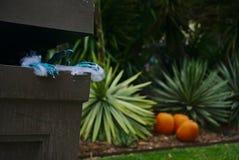 未知的生物的蠕动的蓝色手指 免版税库存照片