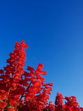 未知的红色花,在台北河沿公园拍照片 免版税库存照片