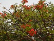 未知的美丽的植物 免版税库存照片