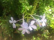 未知的美好的花束在斯里兰卡 图库摄影