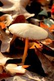 未知的蘑菇 免版税库存图片