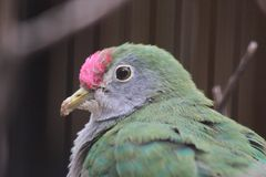 未知的鸟在菲尼斯动物园里 免版税库存图片