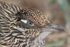 未知的鸟在菲尼斯动物园里 库存图片